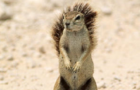 [KK]LiveActionSquirrel#18