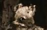 Squirrel, a Symphony