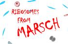 Ribosomes!