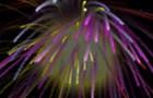 NG Fireworks!