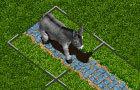 Donkey Dilemma *Fixed*