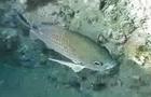 undersea journal aug pt2