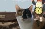 Cat Race 2000