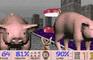 Super 3D Pig Feeder