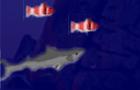 Be the Shark !!!