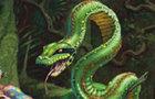 [QZ] - Stellar Pythons
