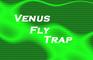 Venus Fly Trap