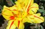 Breaker Gallery: Flowers