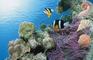 Aquatic Interactive