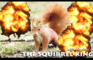 The Squirrel King