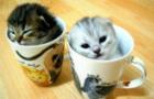 Baby Animal Snap