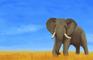 UMoN- Elephants
