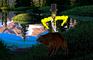Supreme King Bear Edition
