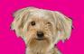 dog rescue sim 2013