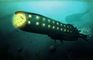 Submersion - Intro