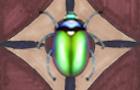 Bug On A Rug