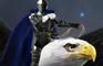Knights Beasts & Magic 3