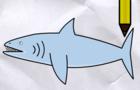 Lets Draw A Shark - DWC