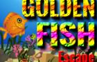 XG Golden Fish Escape