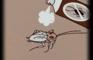 How to kill a roach