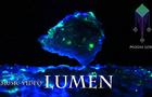[Music Video] Moose Lord - Lumen