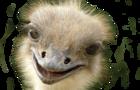 Larry Austrage - the Ostrich