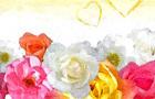 May Roses Swap