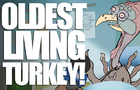 Oldest Living Turkey