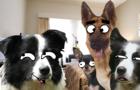 JPEG DOGS