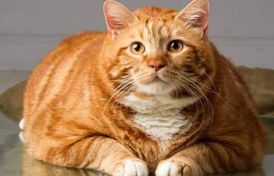 Garfield You Bad Cat