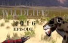 Future wildlife (2016 Version)