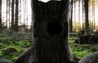First VFX Shot - Tree Beast