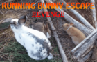 Running Buny Escape
