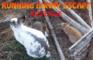 Running Buny Escape