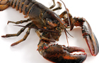 Lobster Clicker