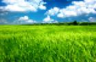 Through fields of grass