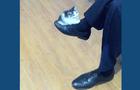 Kitten on leg