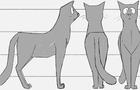 Black cat - Animated turnaround