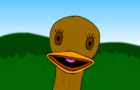 What does a Duck do ?