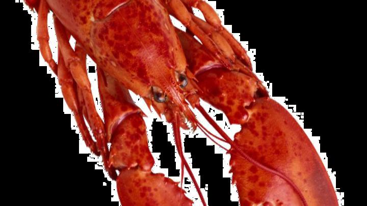 Lobster Clicker 2.0