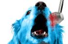 Beware the Doggo Clock