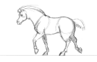 Horse walk cycle