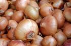 Art of Onions