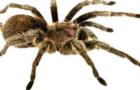 spider quest