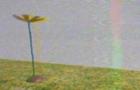 Acidica - Flower Power (EXTENDED)
