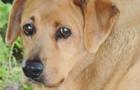 AUTISM DOG BONER BOYS