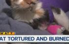 Torturing small animals