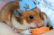 Hamster Dance Collab Shot 14