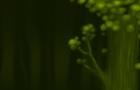 Deer plant