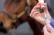 Vaccine Horse Races!